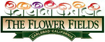 The Flower Fields Carlsbad